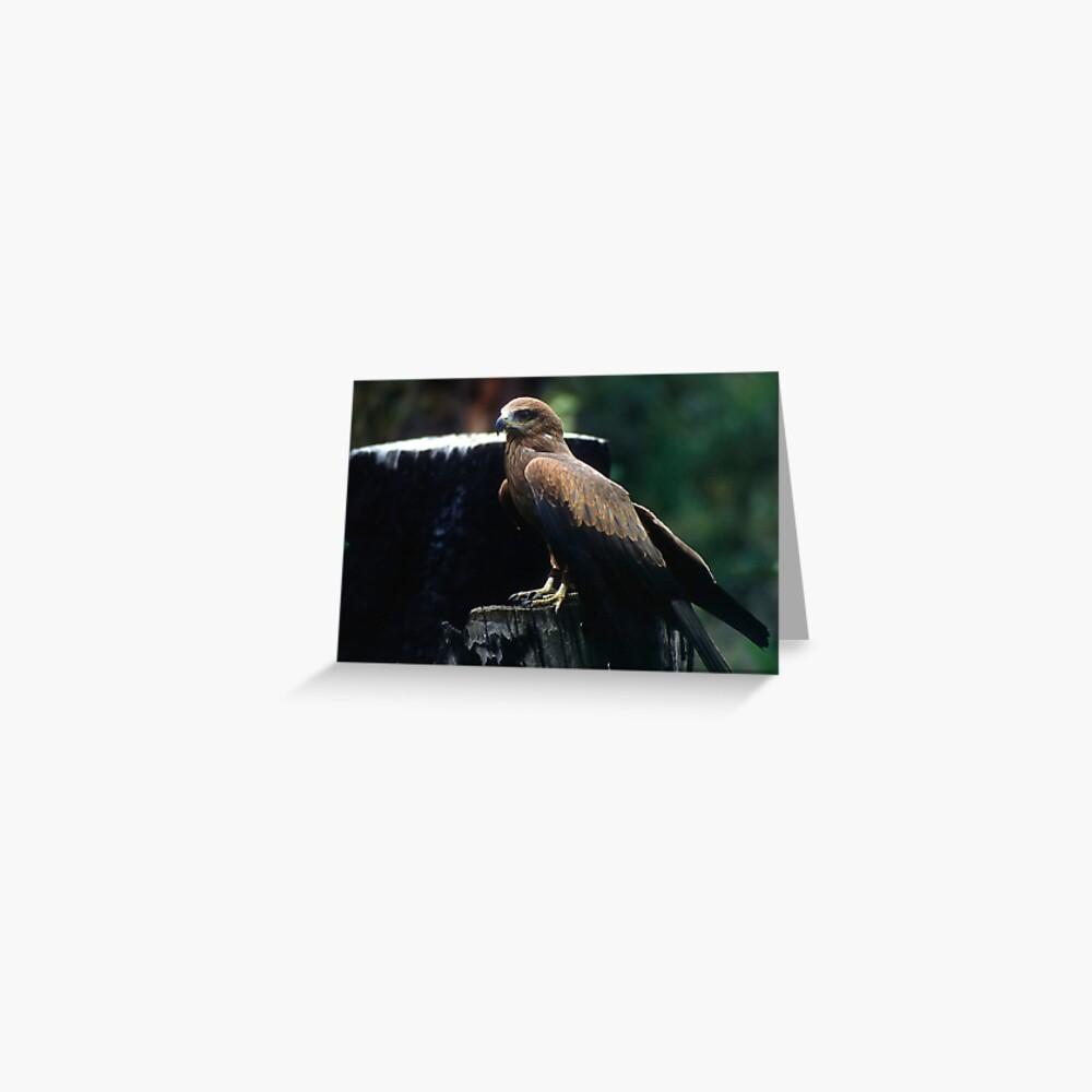 Black Kite Greeting Card