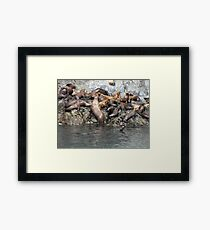 Survival Of the Fittest! Framed Print