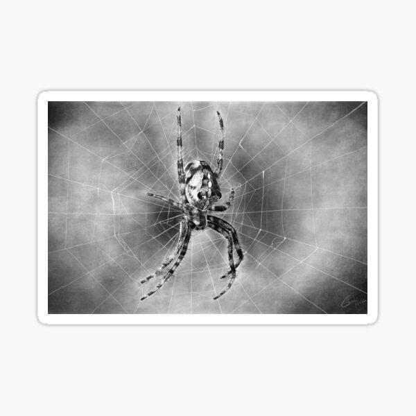 Spinne mit Netz  Sticker