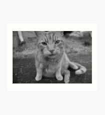 El Gato 2 Art Print