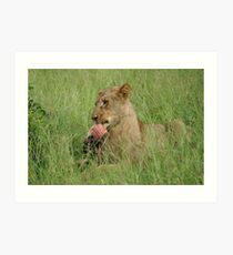Enjoying those ribs! - Kruger National Park Art Print