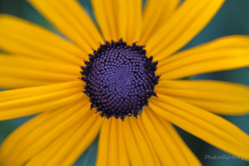 Centered by PhotosByHealy