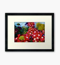 Red Flower Patch  Framed Print