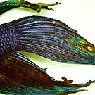 Dead Fish by Jean Beaudoin