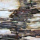 Tree Bark by Michael  Herrfurth