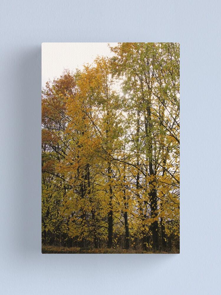 Alternate view of Autumn Trees Canvas Print