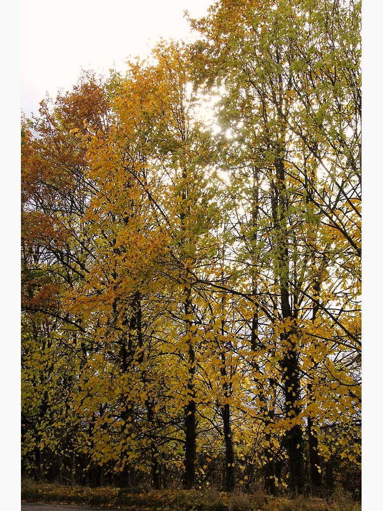 Autumn Trees by robcole