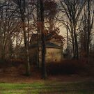 House in the woods by Judi Taylor