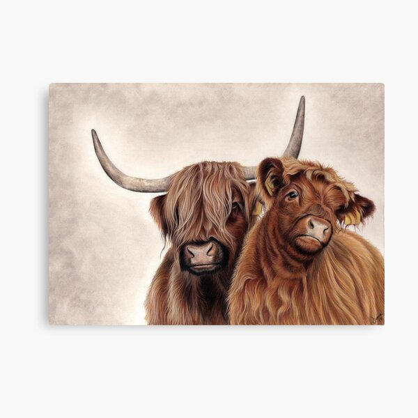 Heilan'Coos - Scottish Highland Cattle Canvas Print