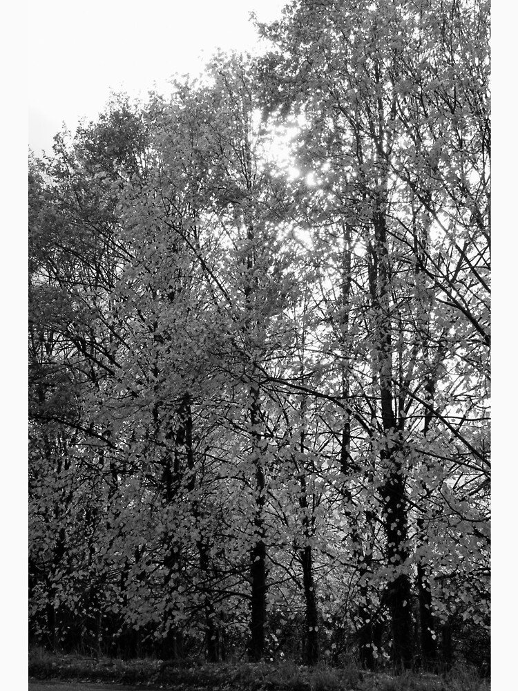 Autumn Trees in Black and White by robcole