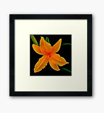 Vibrant- A Beautiful Floral Print Framed Print