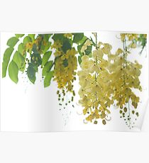 Uncultivated Yellow flowers Poster