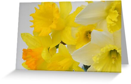 SPRING by NatureGreeting Cards ©ccwri