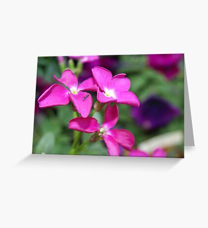 Natures Pillow Greeting Card