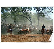 mustering in the Kimberley Poster