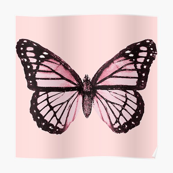 Monarch Butterfly Pink Dream Poster