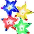 bunte Blumen, Blüten, Winden Blumen, Natur, floral von rhnaturestyles