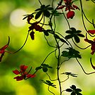 Spindly Red Flowers by RyanLeePhoto
