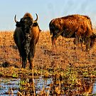 Herd At The Watering Hole by Benjamin Sloma
