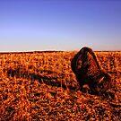 Lone Bison by Benjamin Sloma