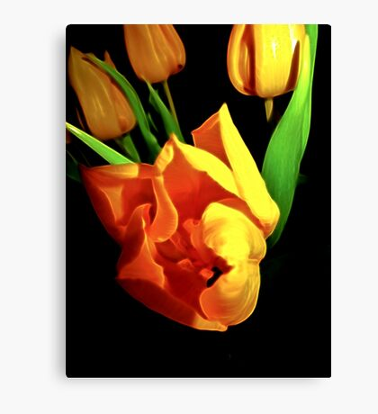 Tulips steal the winter Canvas Print