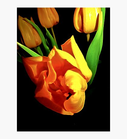 Tulips steal the winter Photographic Print