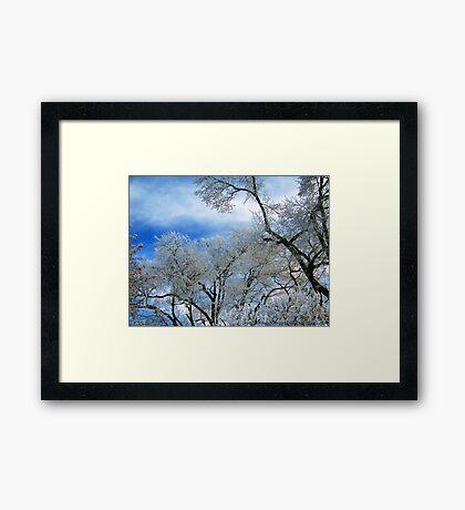 Frozen Trees (Ice Fog) Framed Print