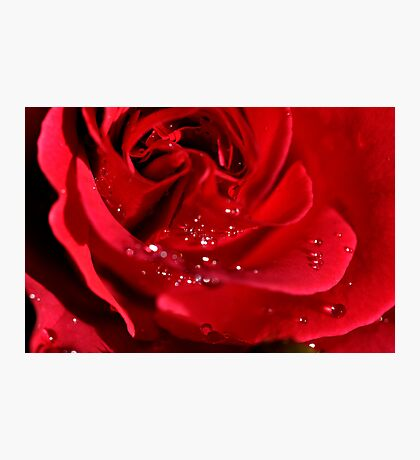 Red red rose Photographic Print