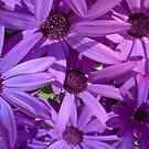 Purple Flowers by Hucksty
