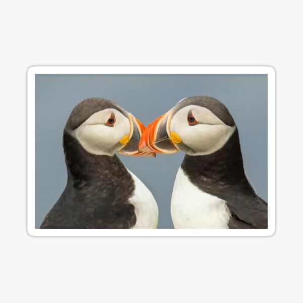 Pair of Atlantic Puffins Sticker