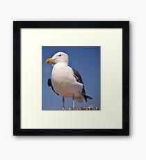 Cosmopolitan Bird- The Seagull Framed Print