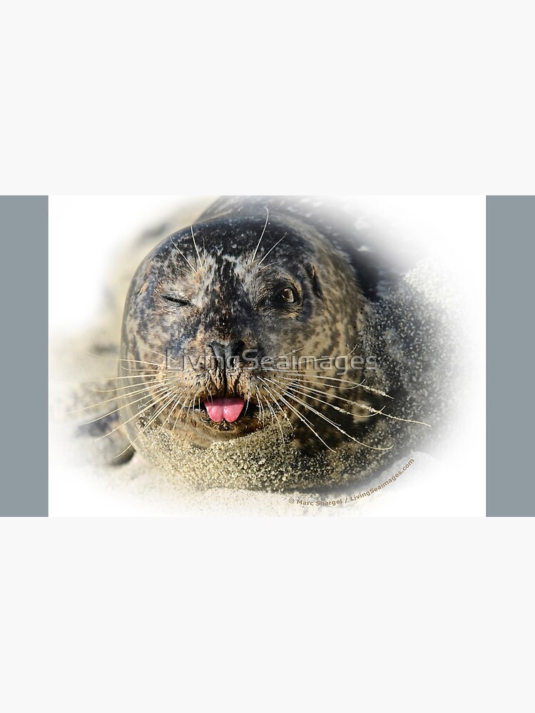 Winking Harbor Seal by LivingSeaimages