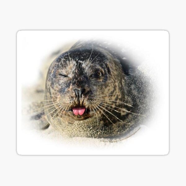 Winking Harbor Seal Sticker