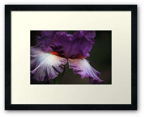 Lavender and Orange by Joanne  Bradley