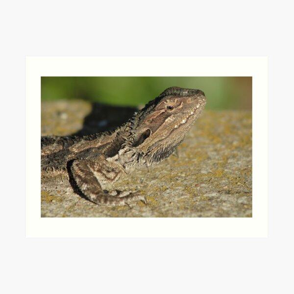 ~Lizard~ Art Print