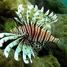 Lionfish at Monte's by Reef Ecoimages
