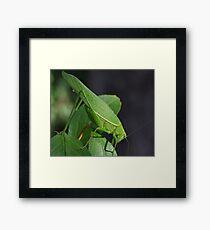 Katydid Close-Up Framed Print