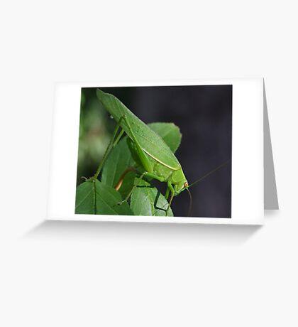 Katydid Close-Up Greeting Card