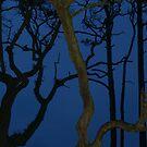 Weird Trees at Twilight by Anna Lisa Yoder