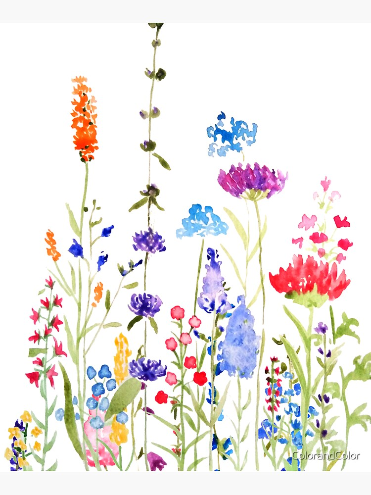 colorful wild flowers watercolor painting by ColorandColor