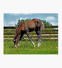 Horses - Growing Up Photographic Print