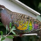 Bronzewing Pigeon two by Rick Playle