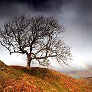 Ord Tree by Jeanie