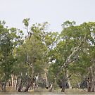 River Red Gum Forest In Flood by Dwayne Madden