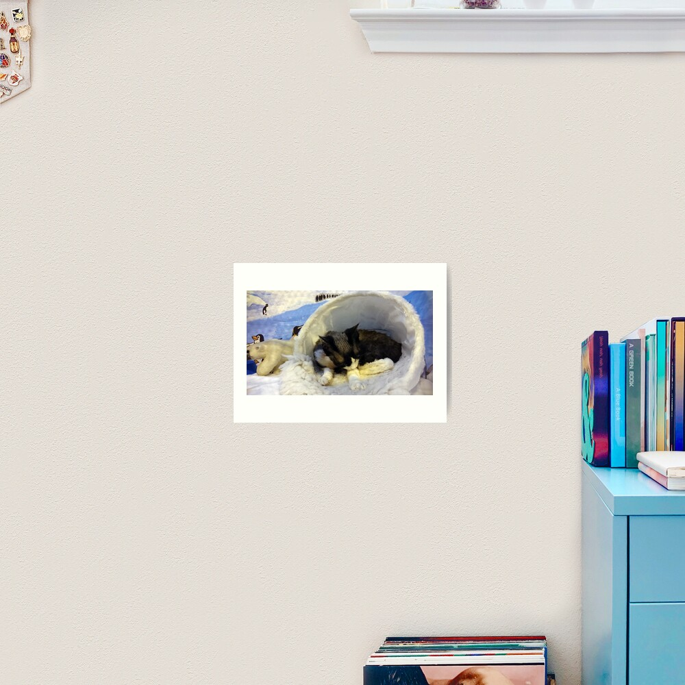 Devonshire cat asleep Art Print