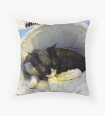 Devonshire cat asleep Throw Pillow