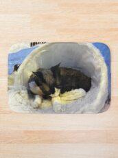 Devonshire cat asleep Bath Mat