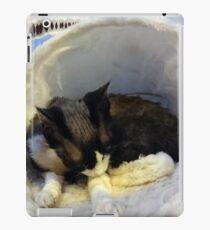 Devonshire cat asleep iPad Case/Skin