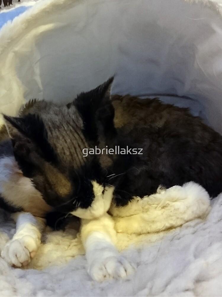 Devonshire cat asleep by gabriellaksz