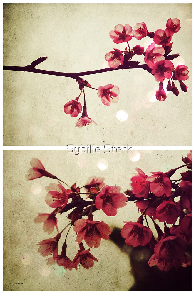 Spring - Cherryblossom Pink by Sybille Sterk